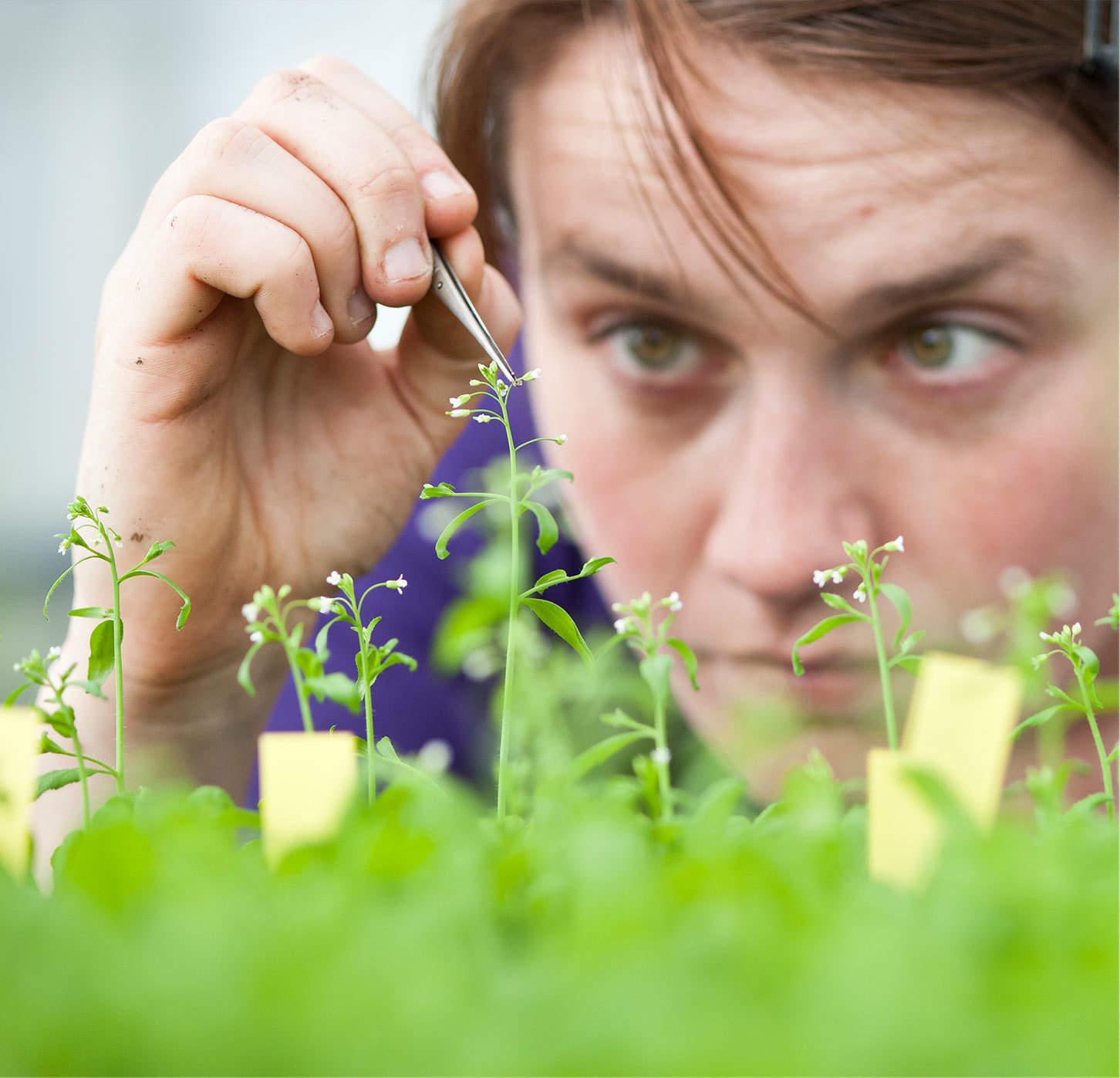 case-van-lanschot-uva-planten-dutchgiraffe